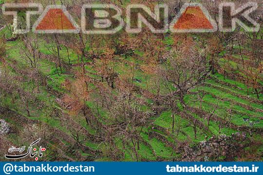 باغهای کردستان، نگین تابناک طبیعت زیبای زاگرس+تصاویر