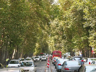 Image result for درختان میوه در خیابان