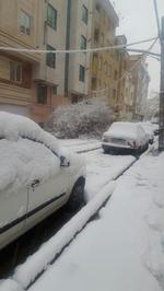 سقوط درخت روی خودرو در خیابان پیروزی تهران