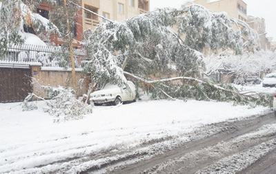 سقوط درخت روی خودرو در خیابان نصرت میدان توحید تهران