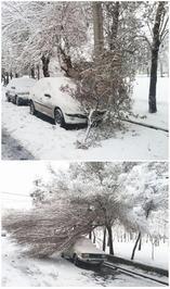 سقوط درخت روی خودرو بهدلیل بارش برف در خیابان کیانی تهران