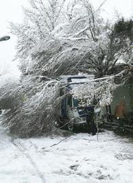 سقوط درخت روی خودرو بهدلیل بارش برف در محدوده بازار تهران