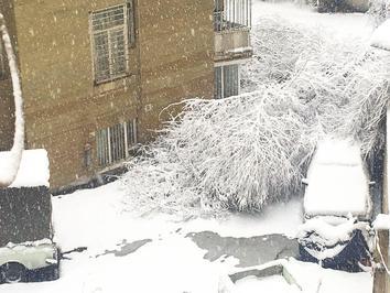 سقوط درخت روی خودرو بهدلیل بارش برف در خیابان دیباجیجنوبی تهران