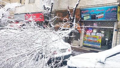 سقوط درخت روی خودرو بهدلیل بارش برف در خیابان شیخالریيس تهران